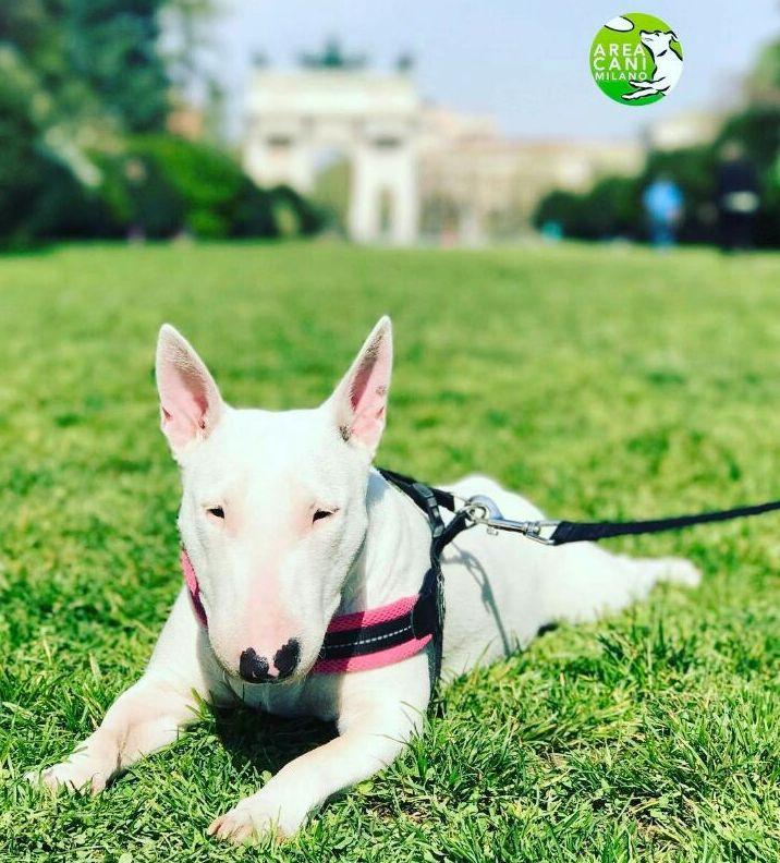 Settimana milanese del cane: il programma di Milano a prova di bau