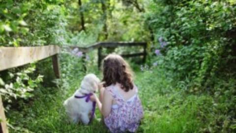 Cani e la gelosia
