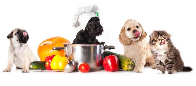 nutrizionista-cani-milano
