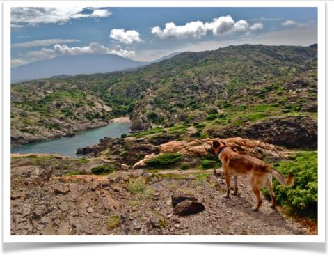 Quattro zampe nel Parco Naturale di Cap de Creus: Clyde ai confini della Spagna orientale