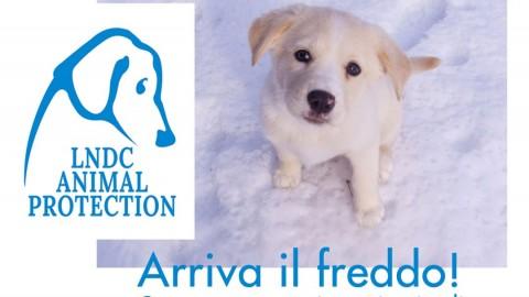 Proteggere il cane dal freddo: la guida di LNDC