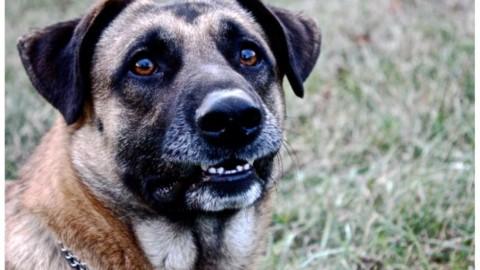 L'aggressione difensiva nel cane