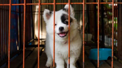 """Bauladu presenta """"Mi Fido di Te"""" la campagna per l'adozione dei cani randagi, rimborsi fino a 400 euro"""
