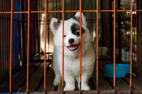 San Potito: fino a 300 euro l'anno se adotti un cane