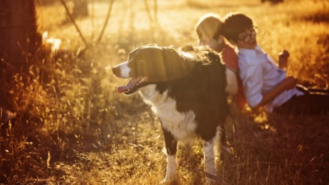 Diabete sotto controllo anche in Italia grazie agli Alert Dog