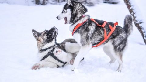 Come proteggere il proprio cane dal freddo