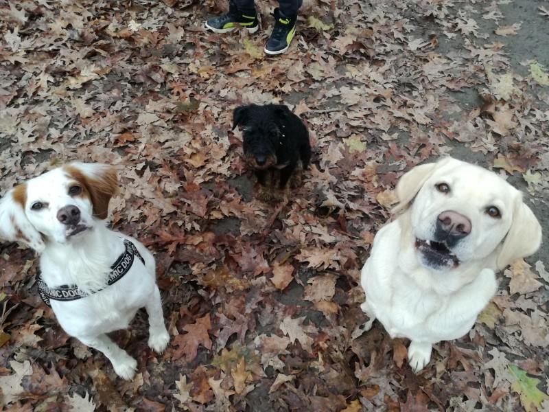 dog-sitter-gratosoglio