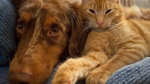Cane o Gatto, chi è il più intelligente?