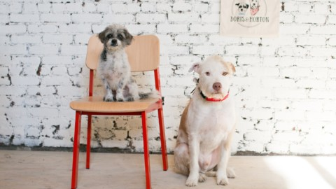 "Aprirà a New York ""Boris and Horton"" il primo bar dog-friendly"