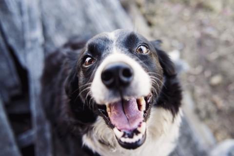 Assemini e Aversa, interessanti incentivi a chi adotta un cane