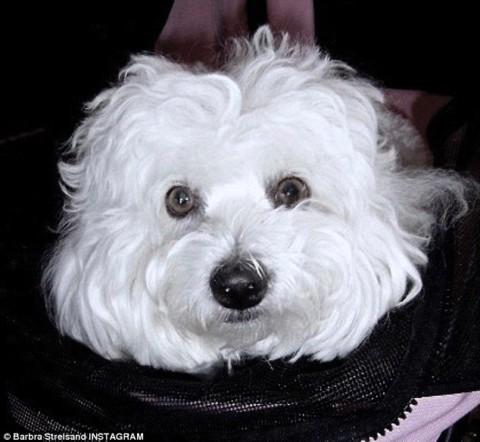 Barbra Streisand ha clonato il suo cane per 50 mila dollari. Due volte.