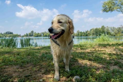 Bau Bau Pasquetta con Mylandog al Green Dog Club!