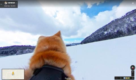 Due cani Akita scattano foto in Giappone per Google Street View!