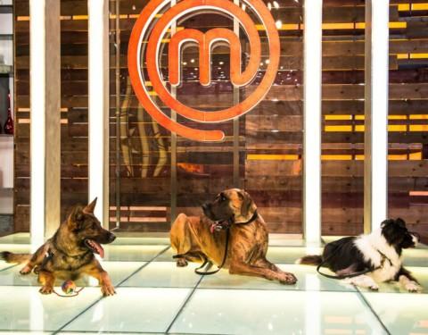 Esposizione Internazionale Canina: a Montichiari arriva Doctor Dog