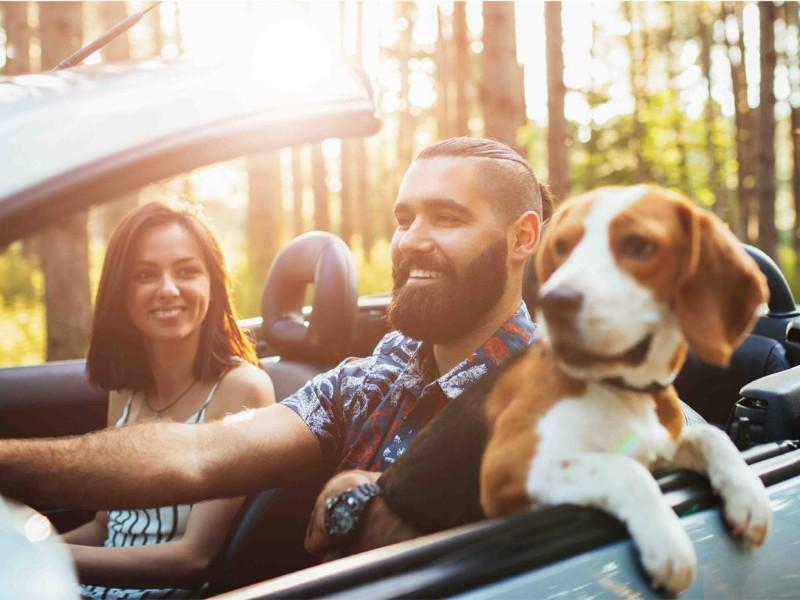 dog-travel-vacanze-cane-noleggio-auto