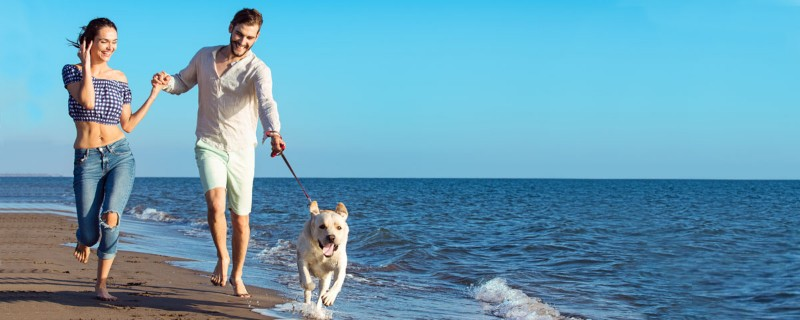 nasce-dog-travel-vacanze-cane