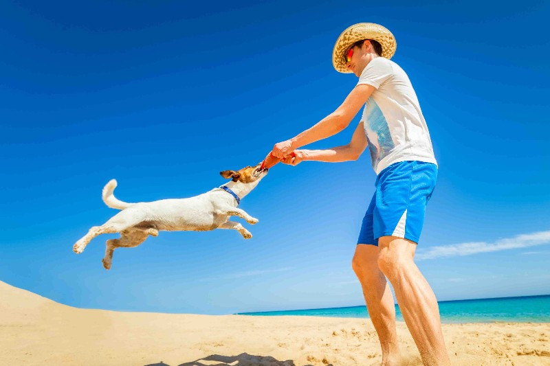 vacanze-cane-dog-travel-holidays-mare