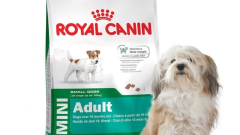 su Amazon cibo Royal Canin per cane adulto piccola taglia in sconto del 51%