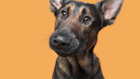 Dogsonality: meravigliose foto di cani dalla fotocamera della tedesca Elke Vogelsang