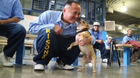 Pawsitive Change Program: in California cani e detenuti insieme per una piena riabilitazione