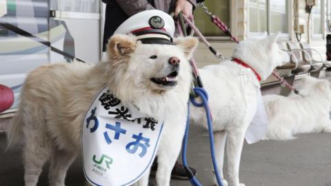 Giappone, ecco Wasao il cane capostazione di Ajigasawa