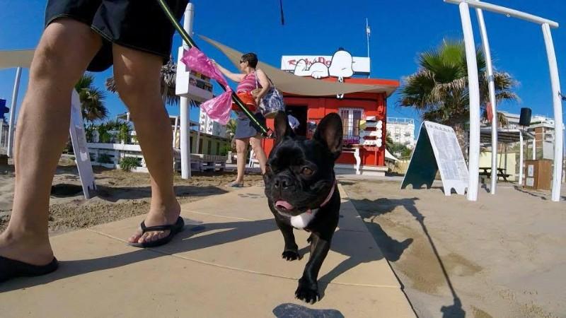spiagge-per-cani-rimini-dog-beach