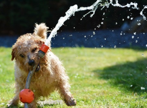 Come proteggere il cane dal caldo durante le passeggiate