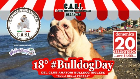 18° Bulldog Day presso Islamorada – Dog Beach