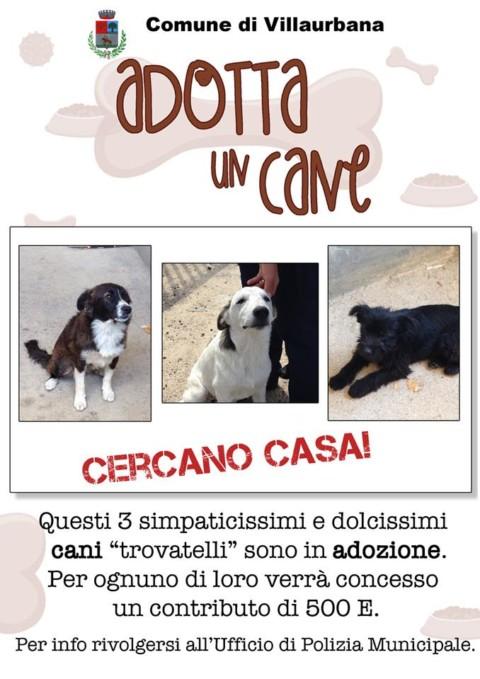 """Villaurbana: """"Adotta un cane"""" stanzierà 500 euro per tre cagnolini"""