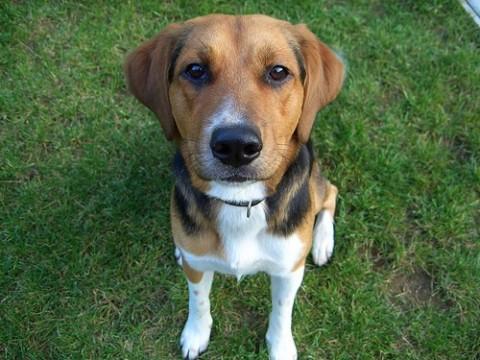 Regalbuto: Tari scontata se adotti un cane dal canile comunale