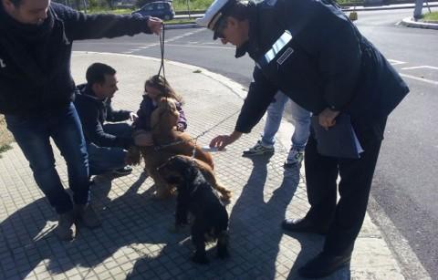Cane Sicuro: a Verona multe a chi non dispone del microchip