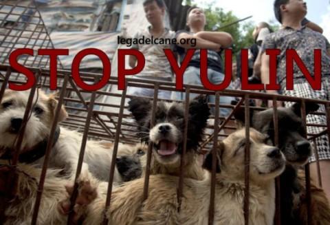 Yulin maledetta e il silenzio delle Istituzioni: facciamoci sentire.