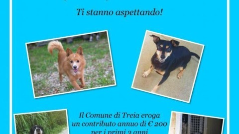 Treia, rimborso spese di 200 euro annui adottando un cane