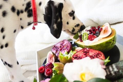 Introduzione all'alimentazione: dieta e salute