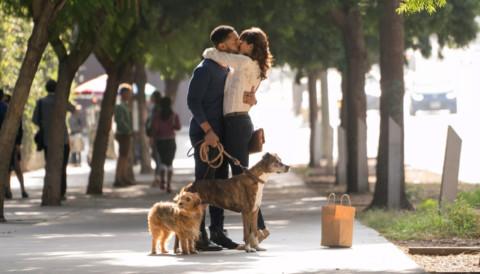 Dog Days al cinema dal 13 settembre