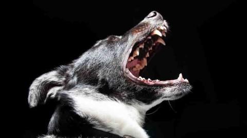 Il cane ABBAIA TROPPO. Ecco COSA FARE