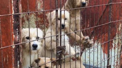 Simon Cowell dona 25.000 dollari e salva 200 cani