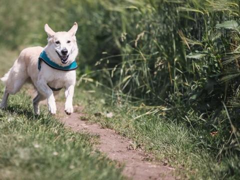 Dog Free: cani liberi per sei mesi in un parco a Milano