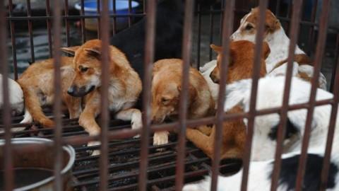 Divieto di macellazione della carne di cane ad Hanoi, Vietnam.