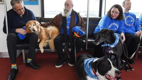 PET THERAPY IN AEROPORTO: ecco il calendario