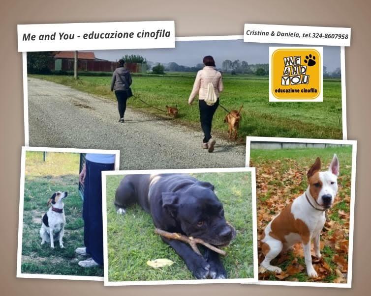 educazione-cinofila-domicilio-torino-piemonte
