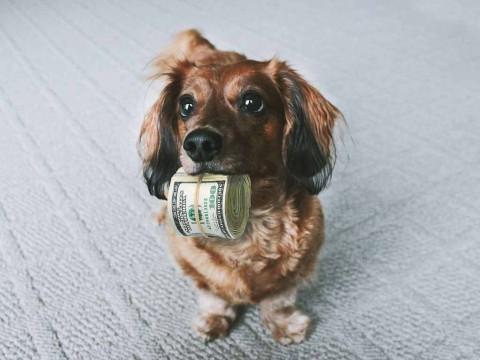 Assicurazione cane e gatto: la guida per non sbagliare