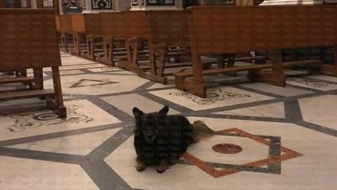 La storia di Martino, il cane chierichetto di Atrani