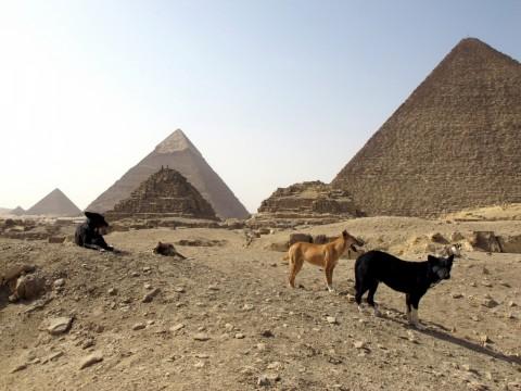 L'Egitto vuole esportare 4.100 tra cani e gatti randagi