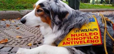 Torino, cani addestrati a riconoscere bocconi avvelenati