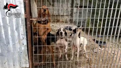 Scoperto e smantellato traffico di cani rubati a Civitavecchia