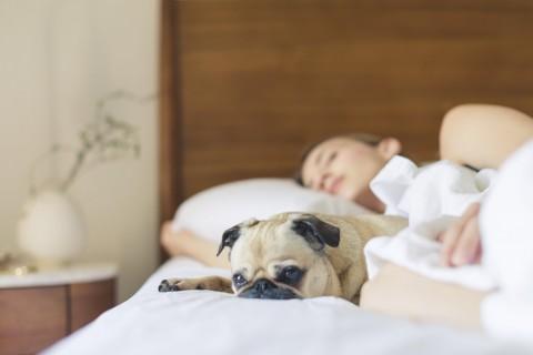 Le donne USA preferiscono dormire con il cane