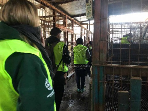 Corea del Sud: chiuso il più grande mattatoio di cani