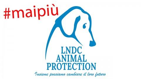 #MaiPiù – Petizione di LNDC per legge contro avvelenamenti