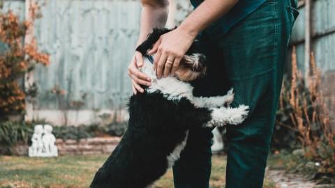 Vietri di Potenza, TARI GRATIS per chi adotta un cane